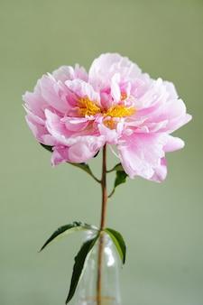 Lindas peônias rosa frescas em vaso de vidro em fundo verde moderno ainda lifenatural floral backgr ...