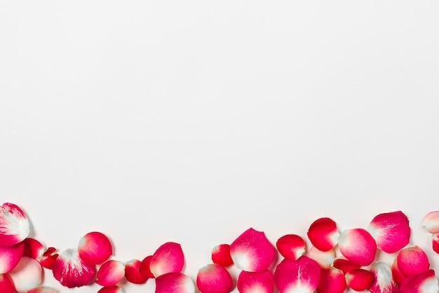 Lindas pétalas de rosa