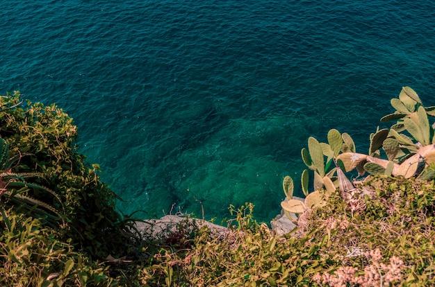 Lindas plantas verdes cultivadas em colinas rochosas perto do mar