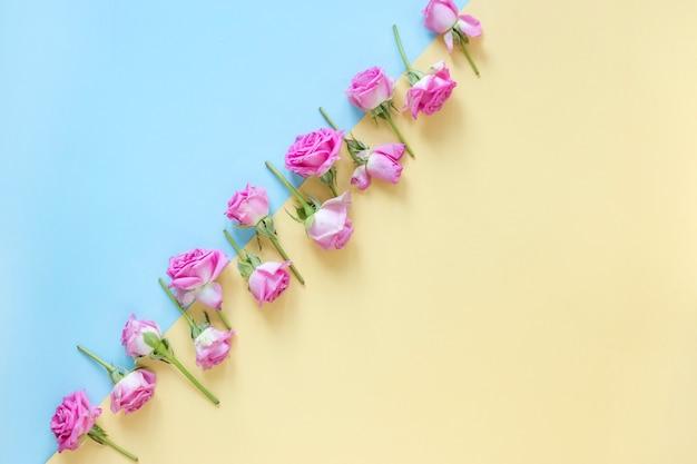 Lindas rosas cor de rosa em fundo colorido duplo