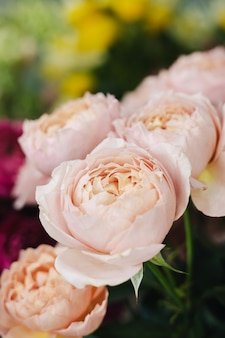 Lindas rosas desabrochando em tons suaves de rosa, em pé na floricultura, perto da vista lateral