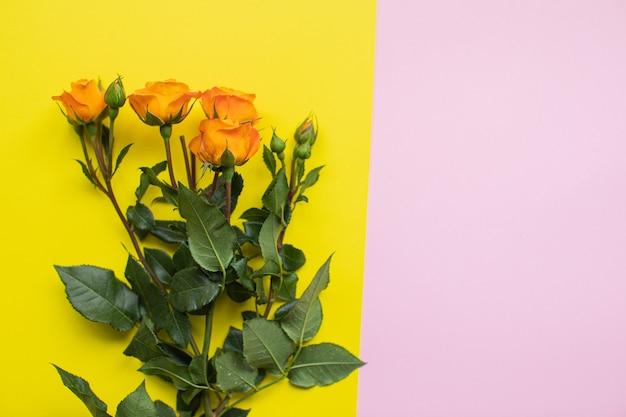 Lindas rosas em fundos de papel multicolorido com espaço de cópia. primavera, verão, flores, conceito de cor. entrega de flores