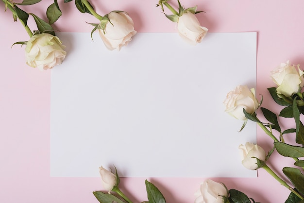 Lindas rosas em papel em branco contra um fundo rosa