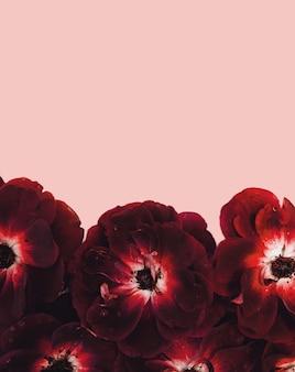 Lindas rosas frescas