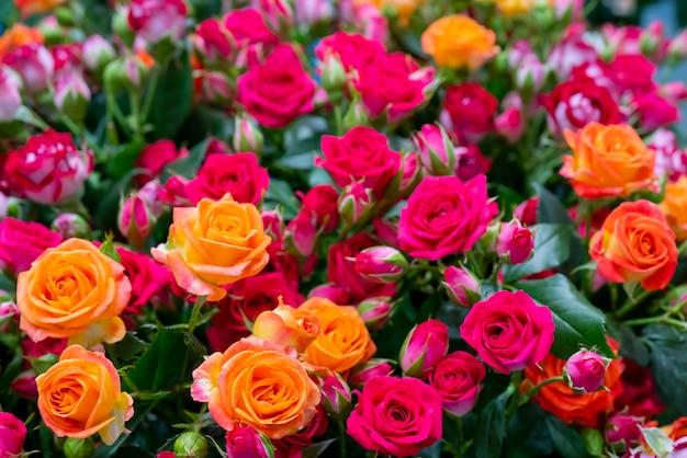 Lindas rosas para casamento e noivado.