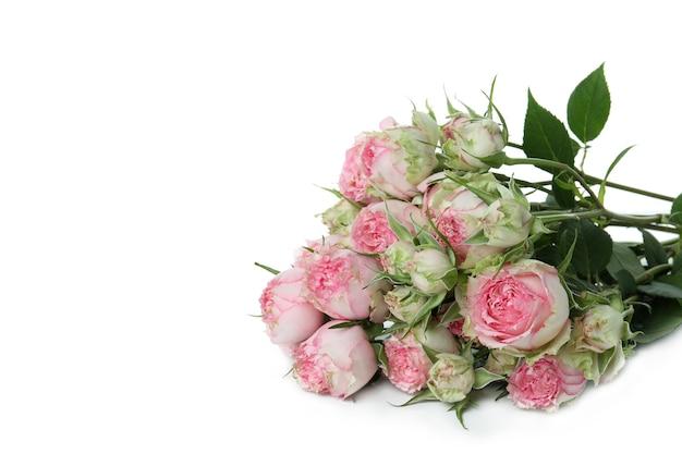 Lindas rosas rosa isoladas em branco