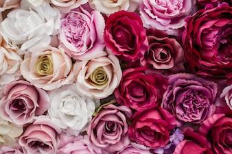 Lindas rosas vermelhas e brancas-de-rosa