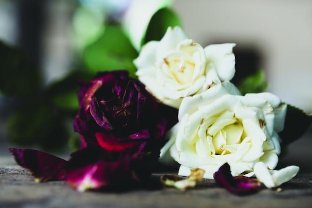 Lindas rosas vermelhas e brancas secas em fundo de madeira grunge