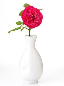 Lindas rosas vermelhas em vaso branco em branco
