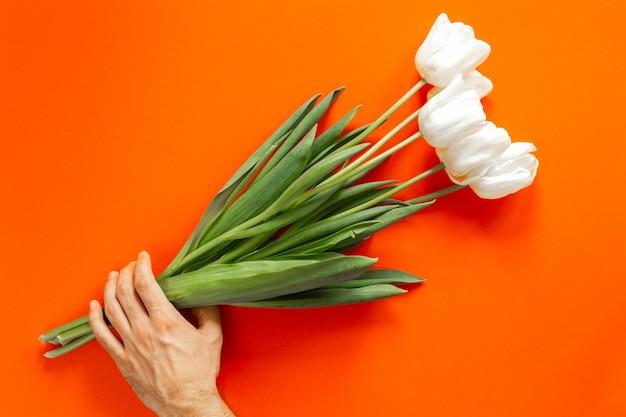 Lindas tulipas brancas e verdes brilhantes na mão na parede laranja. conceito do dia internacional da mulher. copyspace e lugar para o texto. isolado.