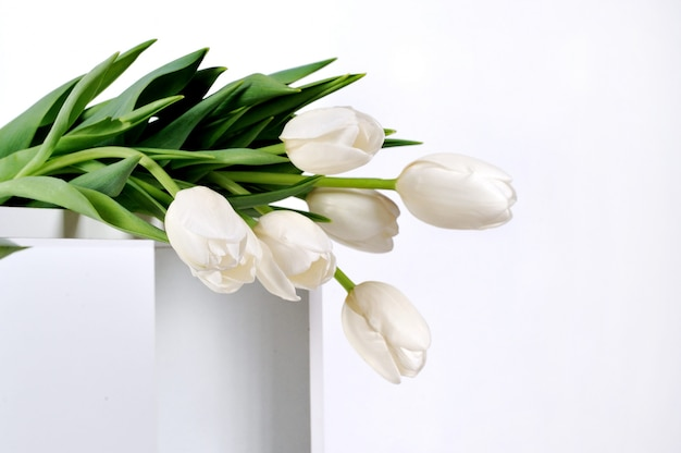 Lindas tulipas brancas em branco