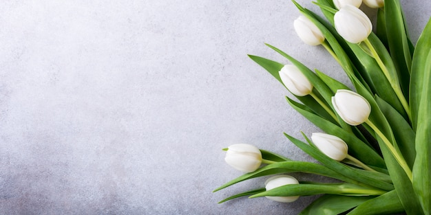 Lindas tulipas brancas