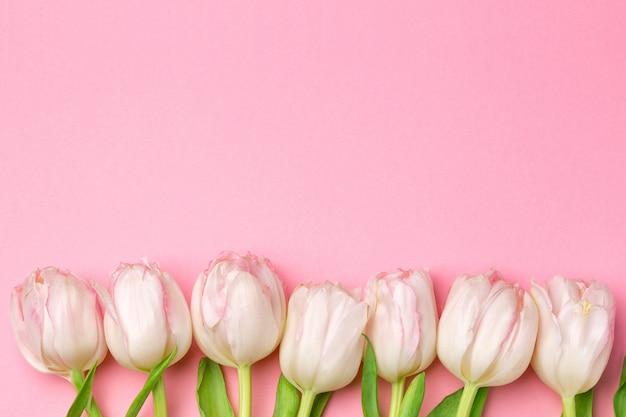 Lindas tulipas cor de rosa e brancas em fundo rosa