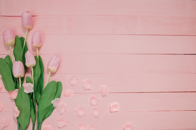 Lindas tulipas em fundo rosa.