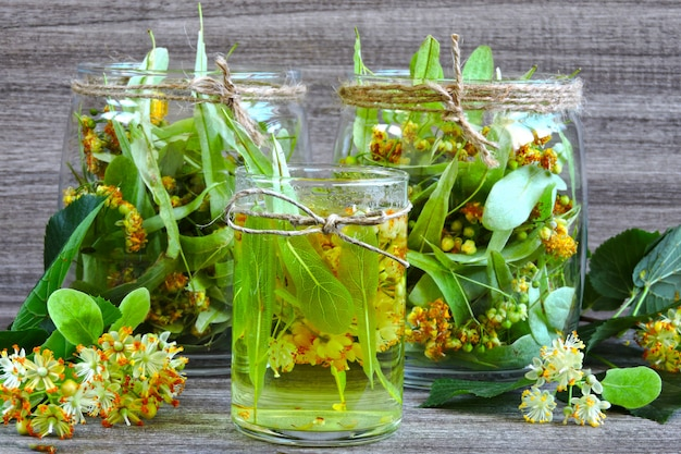 Linden flores em uma jarra de vidro. colheita de chá de tília. chá de tília. cura chá de ervas.