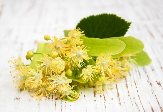 Linden flores