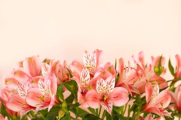 Lindo buquê de flores de alstroemeria sobre fundo claro.