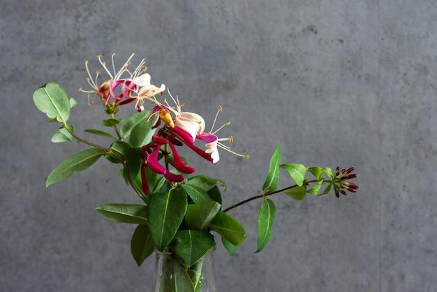 Lindo buquê de flores de madressilva. fundo de férias ou casamento. fechar-se.