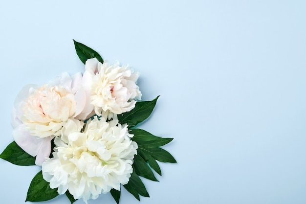 Lindo buquê de flores de peônia vermelha, rosa e branca sobre fundo azul, vista superior, cópia espaço, plano-lay. plano de fundo dia dos namorados, casamento e mães.