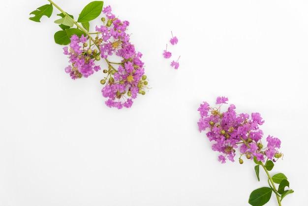 Lindo buquê de flores roxas está florescendo colocar na madeira branca