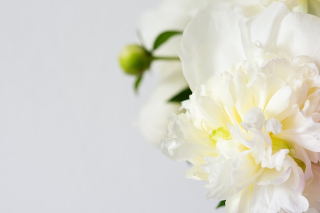 Lindo buquê de peônias, fundo floral de peônias brancas