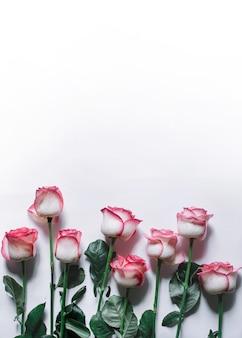 Lindo buquê de rosas desabrocham haste longa rosa sobre fundo branco. vista do topo