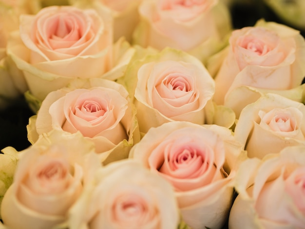 Lindo buquê de rosas frescas