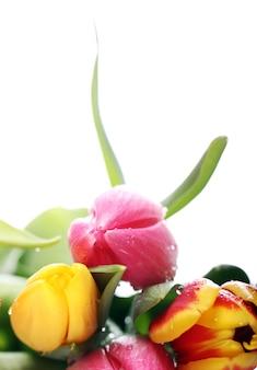 Lindo buquê de tulipas, tulipas coloridas, fundo de natureza