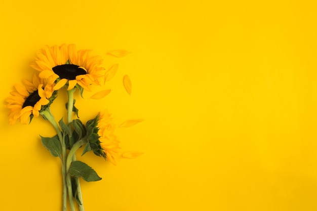 Lindo buquê fresco de girassóis com folhas verdes sobre fundo amarelo