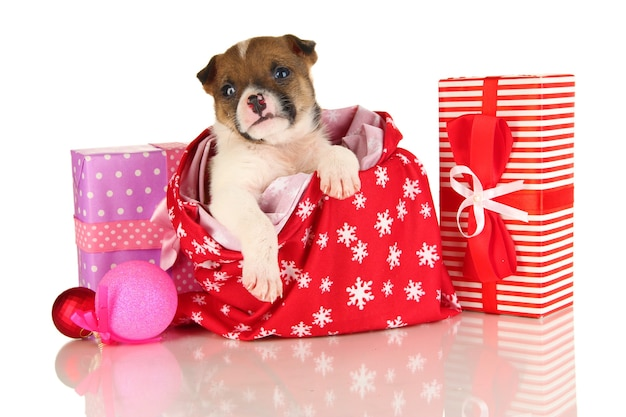Lindo cachorrinho em bolsa de ano novo isolado no branco