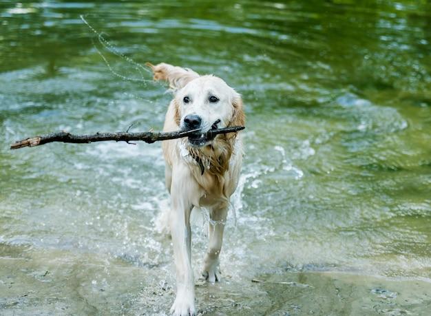 Lindo cachorro andando fora da água