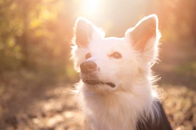 Lindo cachorro jovem à luz do dia