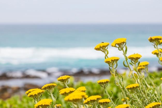 Lindo campo de flores amarelas na praia sob o céu nublado