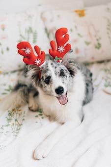 Lindo cão com orelhas de rena
