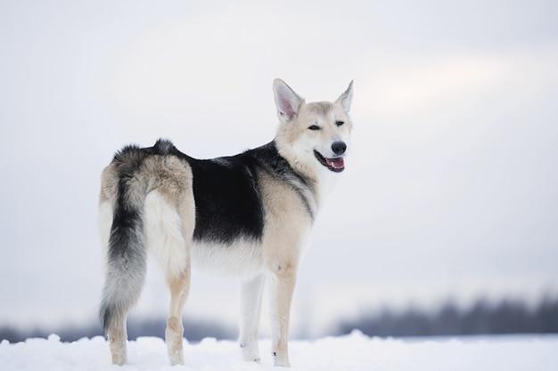 Lindo cão de raça mista em pé no campo, temporada de inverno