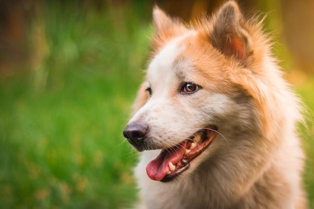 Lindo cão no fundo da natureza.