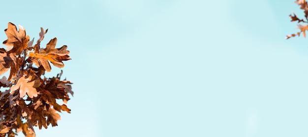 Lindo carvalho marrom dourado com folhas no céu azul