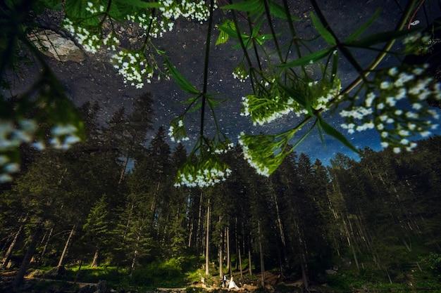 Lindo casal de noivos fica sob árvores altas na floresta à noite