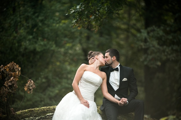 Lindo casal de noivos sentado na floresta em uma árvore caída