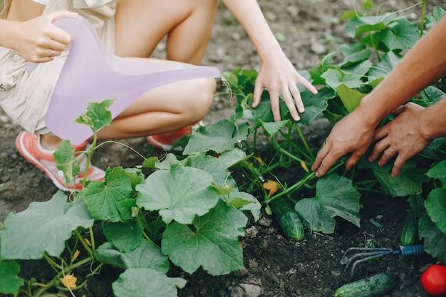 Lindo casal trabalha em um jardim
