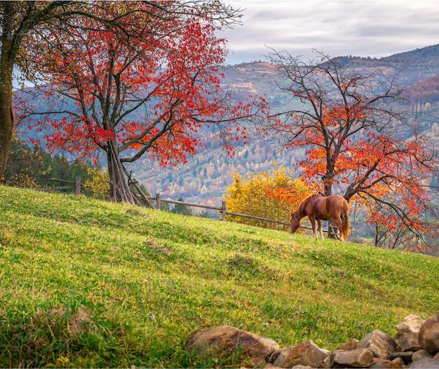 Lindo cavalo marrom na paisagem de outono com árvores vermelhas