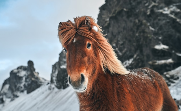 Lindo cavalo pastando em um pasto coberto de neve perto das montanhas.