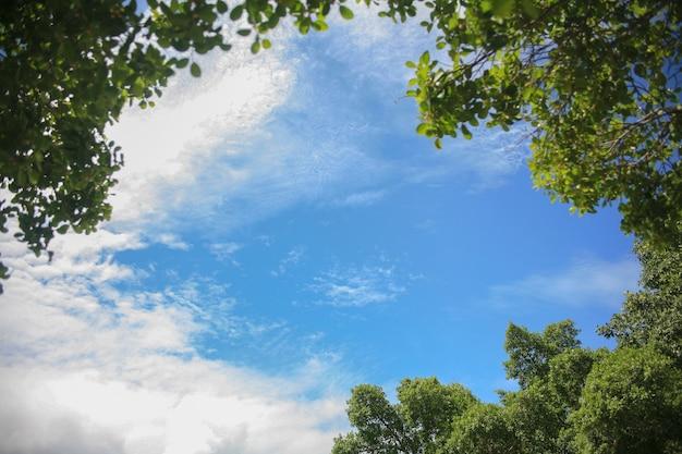 Lindo céu ao redor do quadro com árvores.