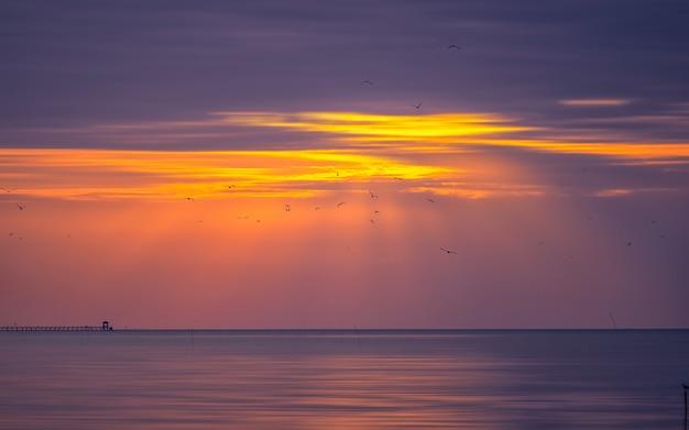 Lindo céu de manhã com um bando de gaivotas.