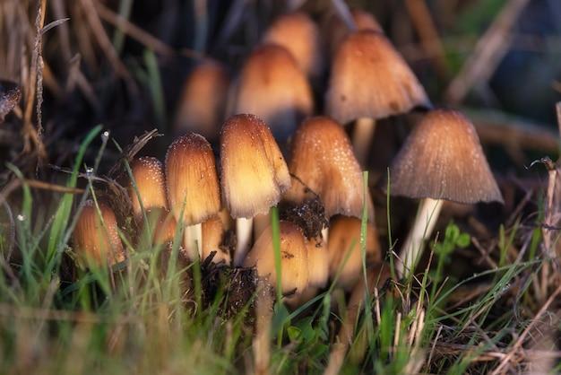 Lindo close de cogumelos da floresta. coletando cogumelos.