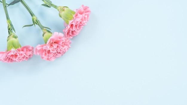 Lindo cravo rosa sobre fundo de mesa azul claro para o conceito de flor do dia das mães.