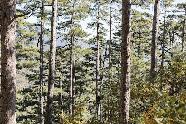Lindo dia ao ar livre na floresta