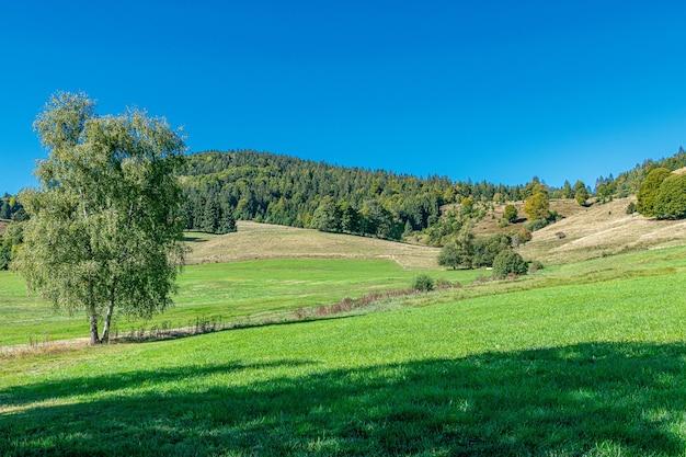 Lindo dia de verão em uma paisagem com pinheiros nas montanhas