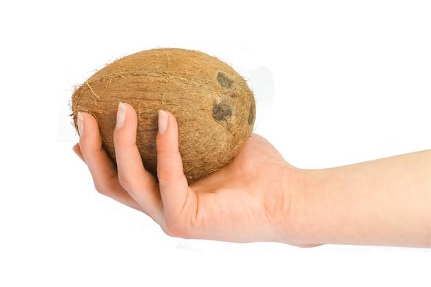 Lindo e delicioso coco em mãos sobre um fundo branco