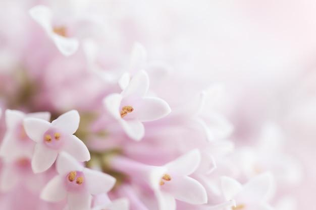 Lindo e suave e delicado fundo de flores com pequenas flores rosa. horizontal. espaço de cópia.
